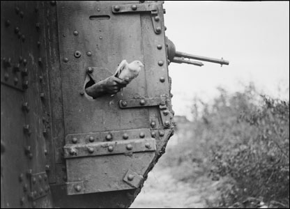 A pigeon being released from a port-hole in the side of a tank, near Albert, 1918. During the First World War pigeons were frequently used to carry messages from tanks.