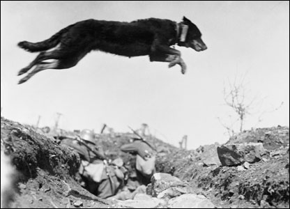 German messenger dog leaping over a trench on the Western Front, 1916.
