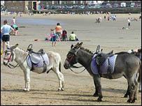 Donkeys on Scarborough beach