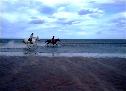 These horses galloping through the surf at the West Sands Beach in St