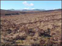 Blanket bog in Lake Vyrnwy (picture: RSPB)