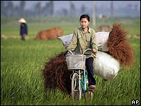 Woman in a Vietnamese field