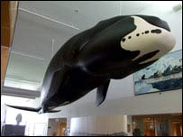 Model of a bowhead whale at the Cultural Centre in Barrow