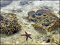 A coral reef near the beach at low tide in Zanzibar, Tanzania