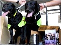 Sniffer dogs Lucky and Flo