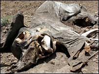 Body of a dead elephant