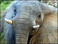 An elephant in Zakouma National Park