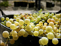Epicatechin is found in grapes