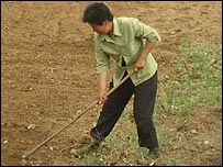 Woman works in a field in China