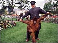 Johnny Morris ayuda a caminar a un orangután (archivo)