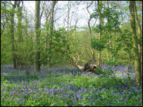 Thorpe Wood Nature Reserve