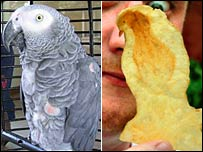 An African Grey Parrot and a cheese and onion parrot
