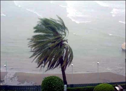 Palm tree buffeted in the cyclone
