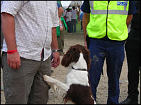 Dog searching man at festival
