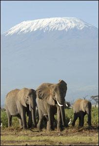 African elephants (Image: BBC)
