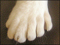 The cat's rear paw has six toes