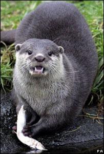 An otter (Image: PA)