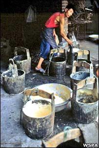 Bile buckets (WSPA)