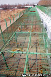 Cages at a tiger farm (Image: Save the Tiger Fund)