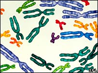 Coloured chromosomes (SPL/Bsip Ducloux)