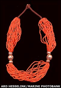 Coral necklace Image: Ard Hesselink/Marine Photobank