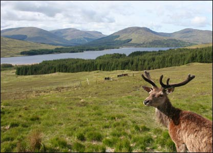 Deer in front of loch