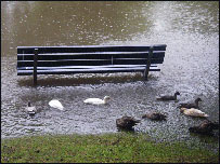 Nice weather for ducks (picture courtesy Jonathan Barr, taken in Ward Park, Bangor)