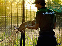 Policeman at Linate with trapped hare, 17 June 2007