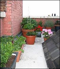 Jardine's garden