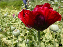 Poppies in Afghanistan - file picture