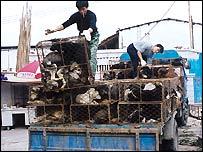 South China Wild Animal Market