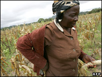 A woman farmer near Bikita, Zimbabwe (file image from 02/04/2007)