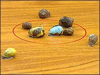 Snailwell snail racing