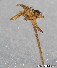 Arctic plant (Jim McNeill)