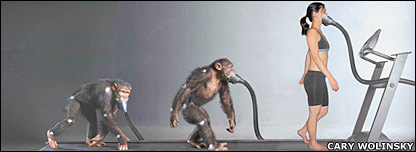 Composite picture of chimp and human on treadmill. Image: Cary Wolinsky