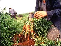 Migrant agricultural workers