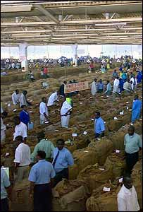 Tobacco auction house in Lilongwe, Malawi