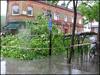 Tree over Beaumont Mews
