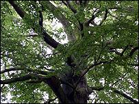 A tree (Image: BBC)