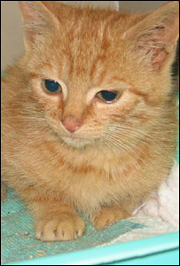 The kitten rescued from a car