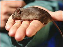 Mouse, Research Defence Society