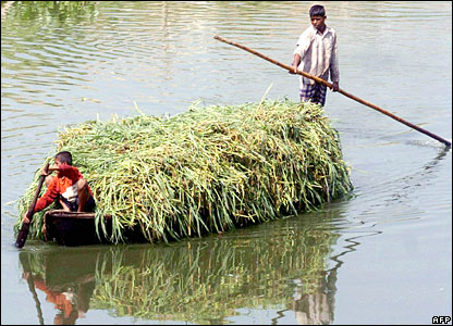 Boys in Bangladesh steer a raft laden with cut grass to be used as cattle feed
