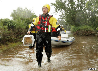 The RSPCA rescuing a cat