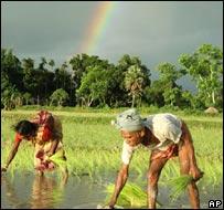 Campesinos en India