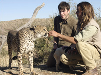 Simon meets a tame Cheetah at an animal rescue centre