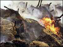 Pyres of burning cattle