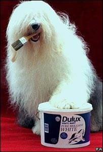 Dulux dog with paw on Dulux paint tin