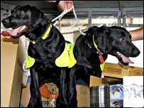 Sniffer dogs Lucy and Flo