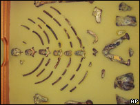 Remains of Lucy, the oldest humanoid skeleton ever found.