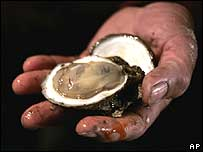 Oyster in a hand